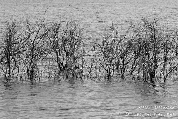 Sardinië - Lago di Baratz