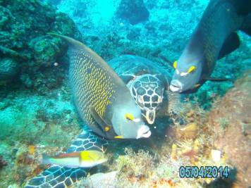 Cozumel Mexico with Diveshack USA May 2014 25