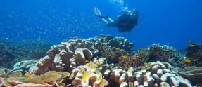 Fun Diving on Tioman Island with B&J