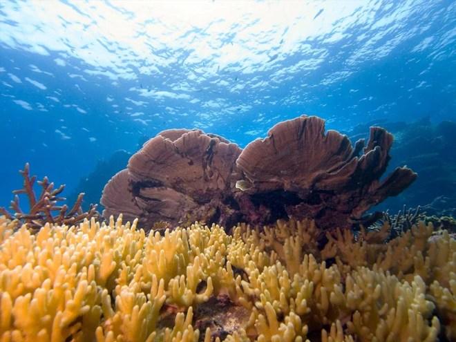 Leisure-Diving-Tioman-Island