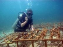 Cleaning reef nursery