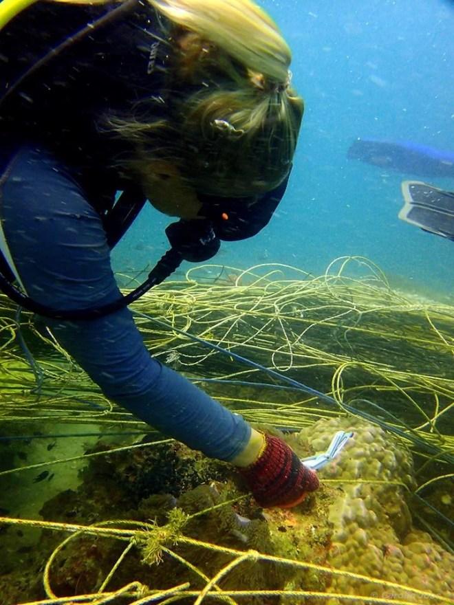 Using Seasnip to remove the net