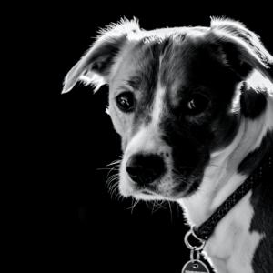 Pets-Black-3.png