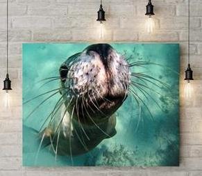 sea-lion-ocean-photography-print-rachel-brooks-art