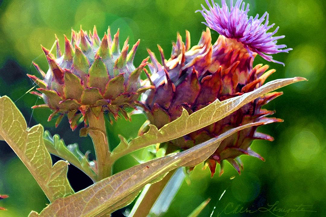 prickly artichoke