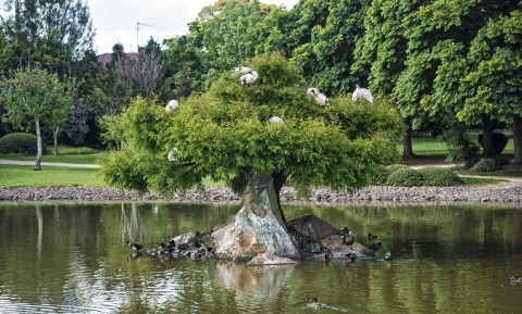 tree-1180517