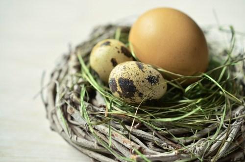 egg-1272782