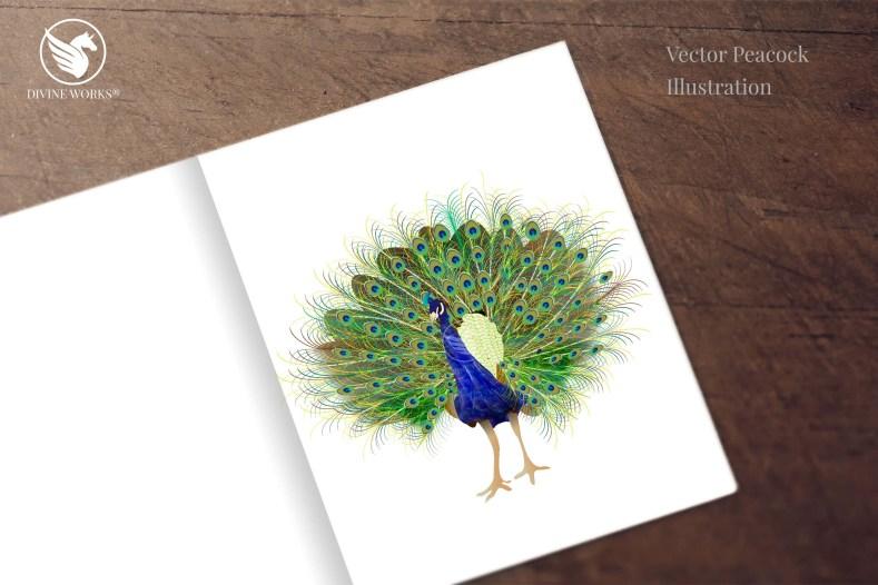 Peacock - digital vector illustration