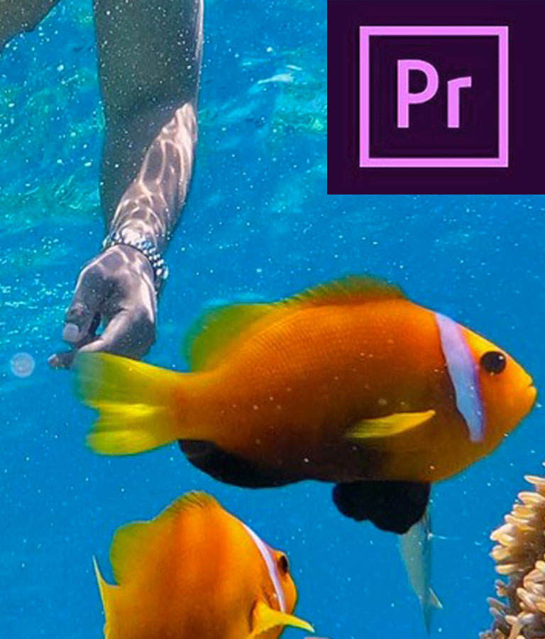 Adobe Premiere CC 2019 – Quick Start Zero To Hero
