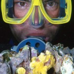Frogfish & Diver