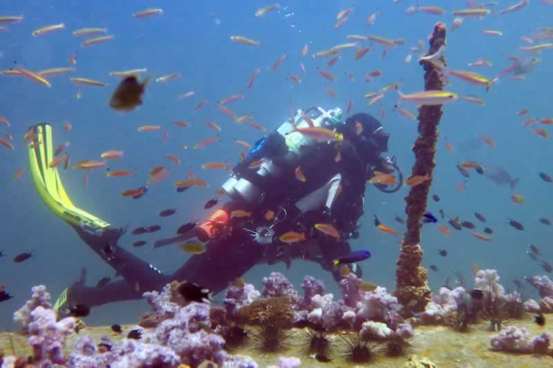 Rebreather Liveaboard Thailand Trips to Similan Islands