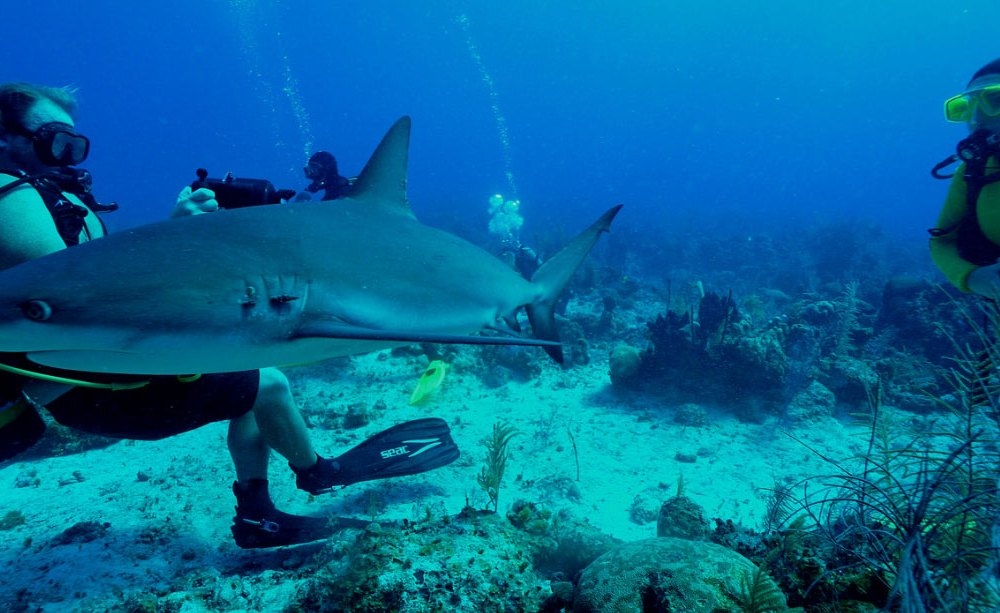 Turks and Caicos: Rock'n'Roll Spot with a lots of sharks!