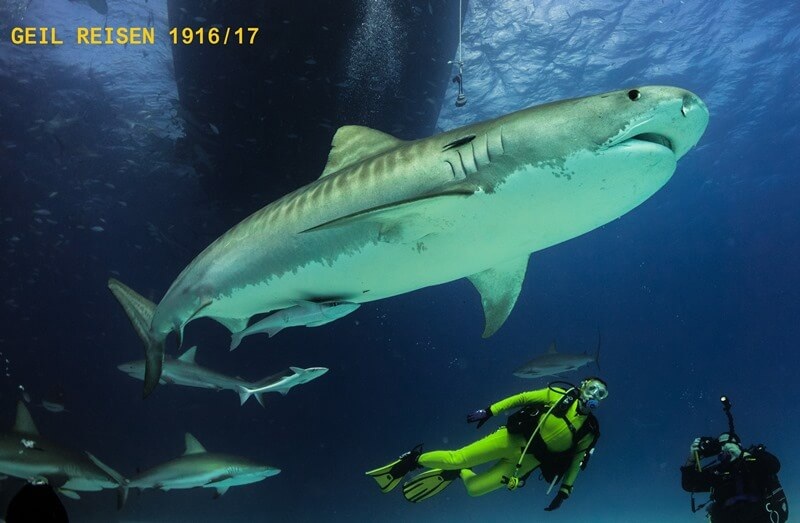 Teil 2 & 3 Bahamas:  Sharks - sharks - sharks,  big and small