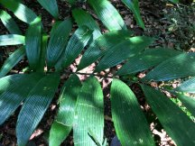 Blätter wie Plastik