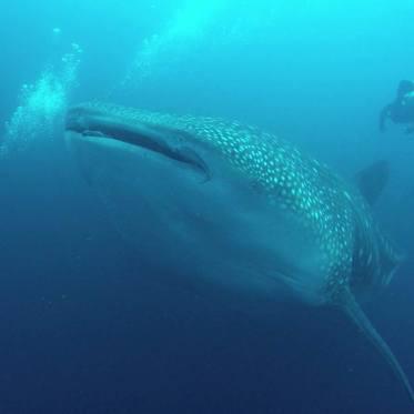 Walhaibegegnung in Darwin