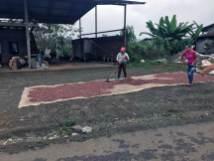 Kakao wird am Boden getrocknet