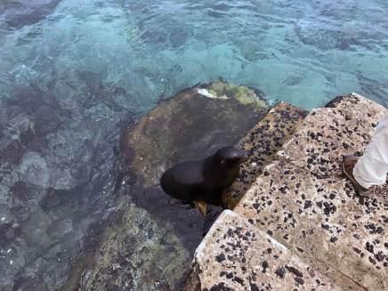 Ein kleiner Seelöwe heißt uns Willkommen
