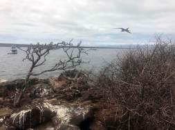 Seymour Island