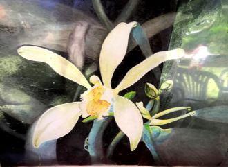 Vanilleblüte