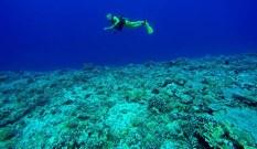 Übers Korallenriff schweben