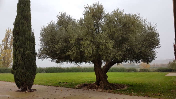 Artajo-Divinos Sabores- Olivo