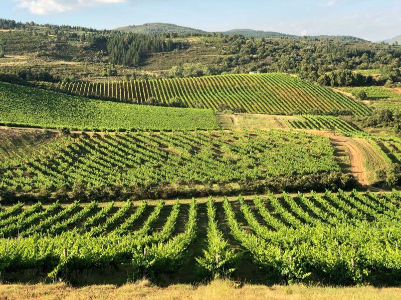 Bierzo-viñas bodega del Abad
