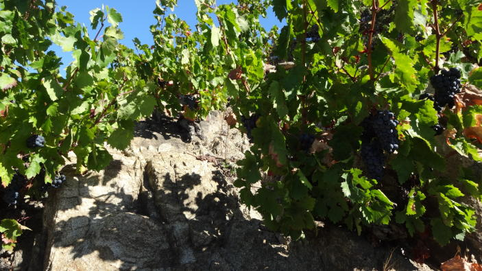winesafari-Riberach-Divinos-Sabores-piedra