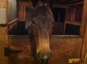 Horse named Zeus