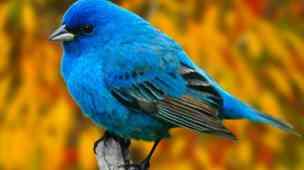 Twitter blue bird passaro azul
