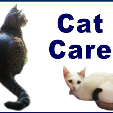 Cat Care and Visitor