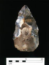Kilformat verktyg med musselfossil. Faustkeil mit Muschelfossil (Spondylus spinosus). © Museum of Archaeology and Anthropology, University of Cambridge, UK