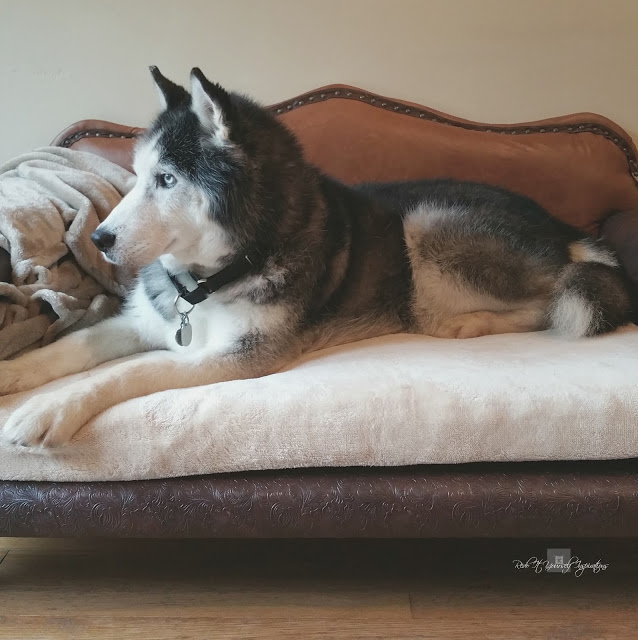 Leather dog sofa bed tutorial