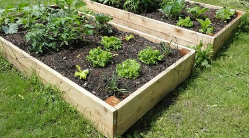 Building A Wooden Raised Bed Diy Extra