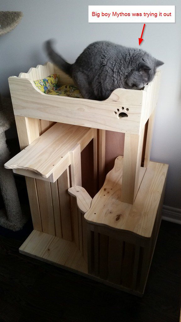 DIY Cat Furniture modern design with no carpet  Lee