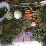 Our farm veggie subscription experiment (aka CSA)