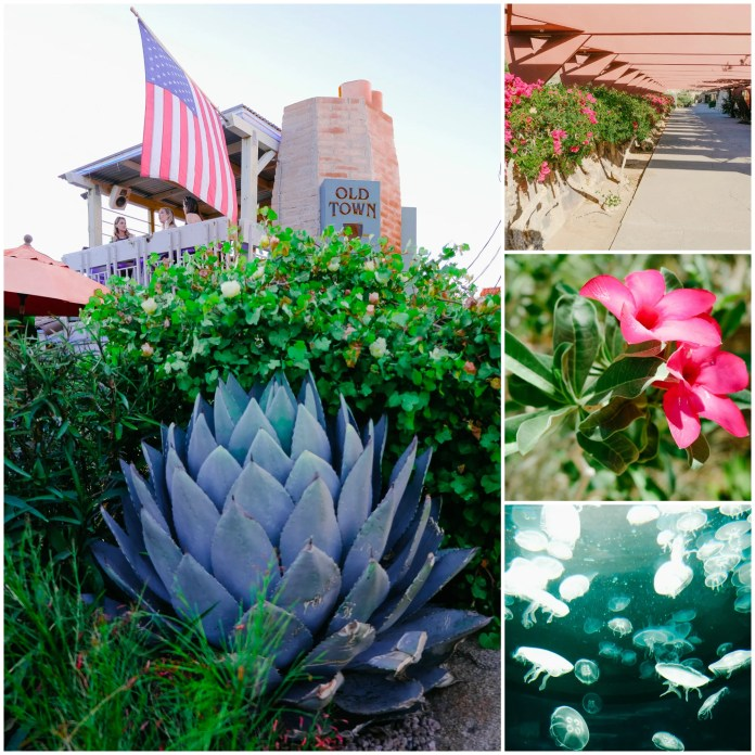 Things to do in Arizona: Scottsdale, AZ Travel Guide