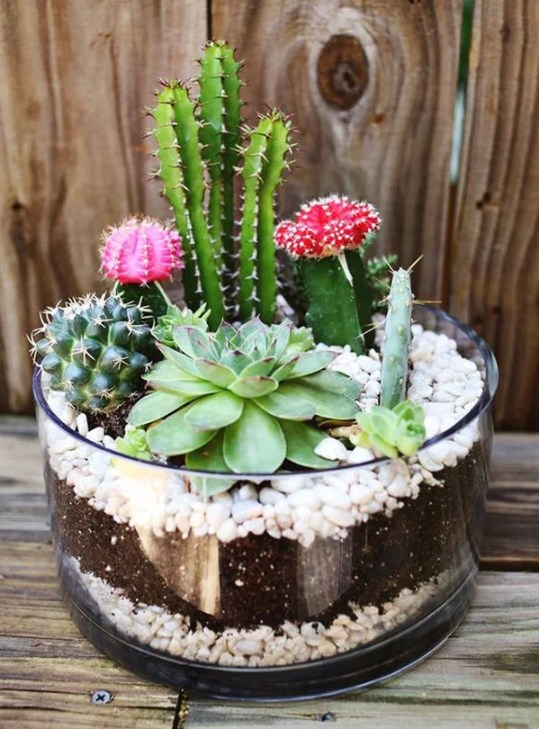 Indoor Cactus and Succulent