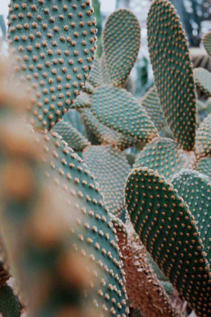 Cactus Plant for Desert Gardening