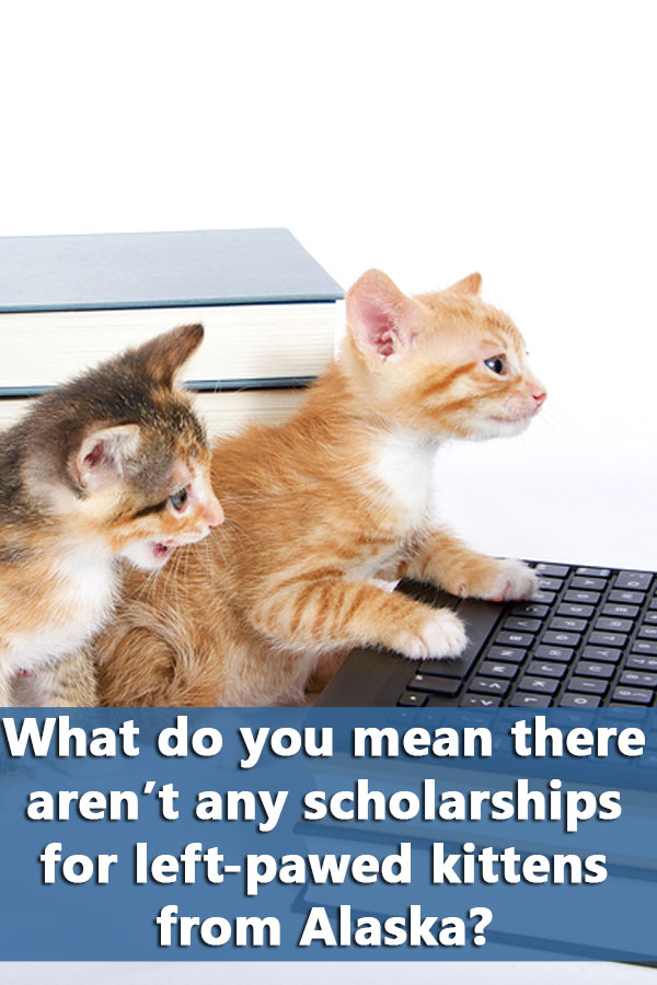 Where to Find the Best Scholarships