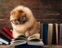 dog with glasses reading about scholarship search toolkits