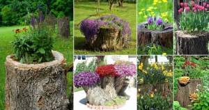 tree-stumps-transformed-into-beautiful-flower-planters