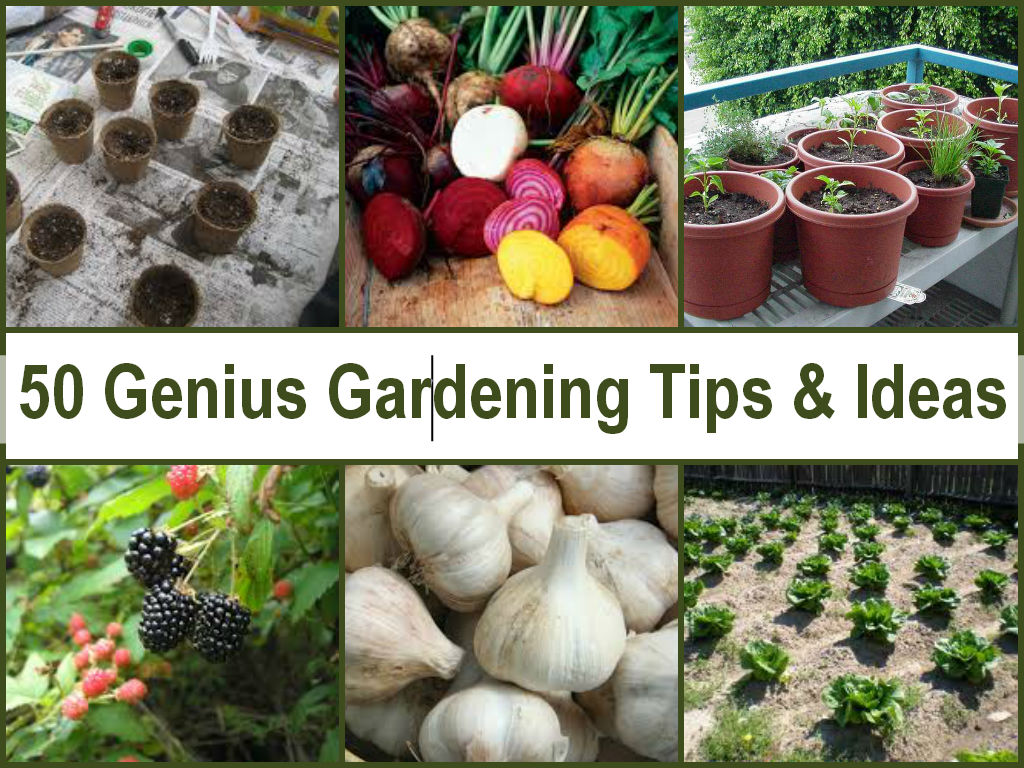 Genius Gardening Tips & Ideas