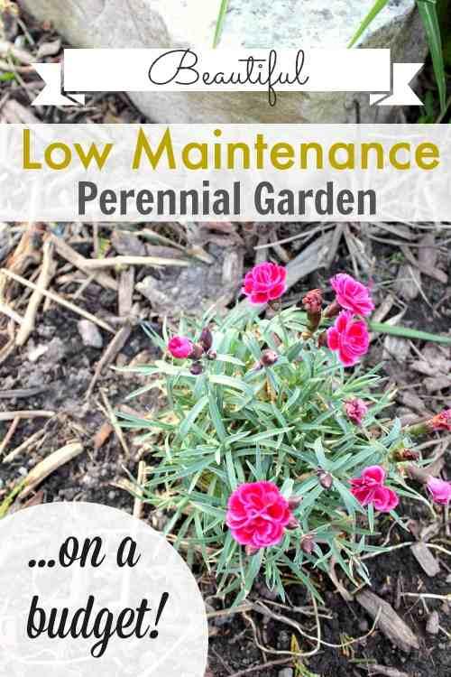 maintenance perennial garden