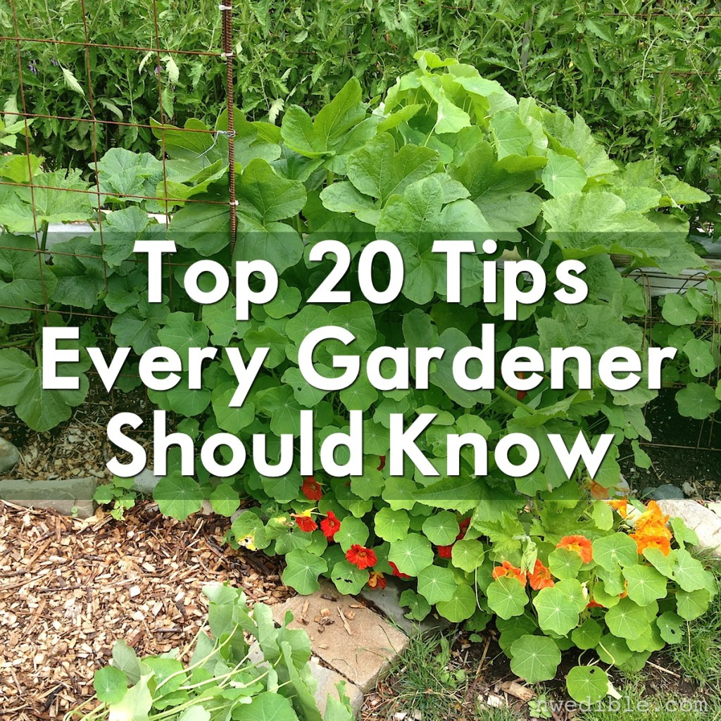 20 Insanely Clever Gardening Tips & Ideas
