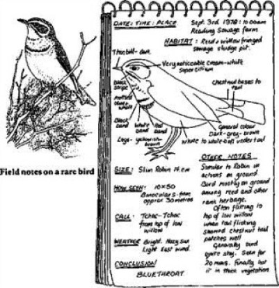 field notes on a rare bird