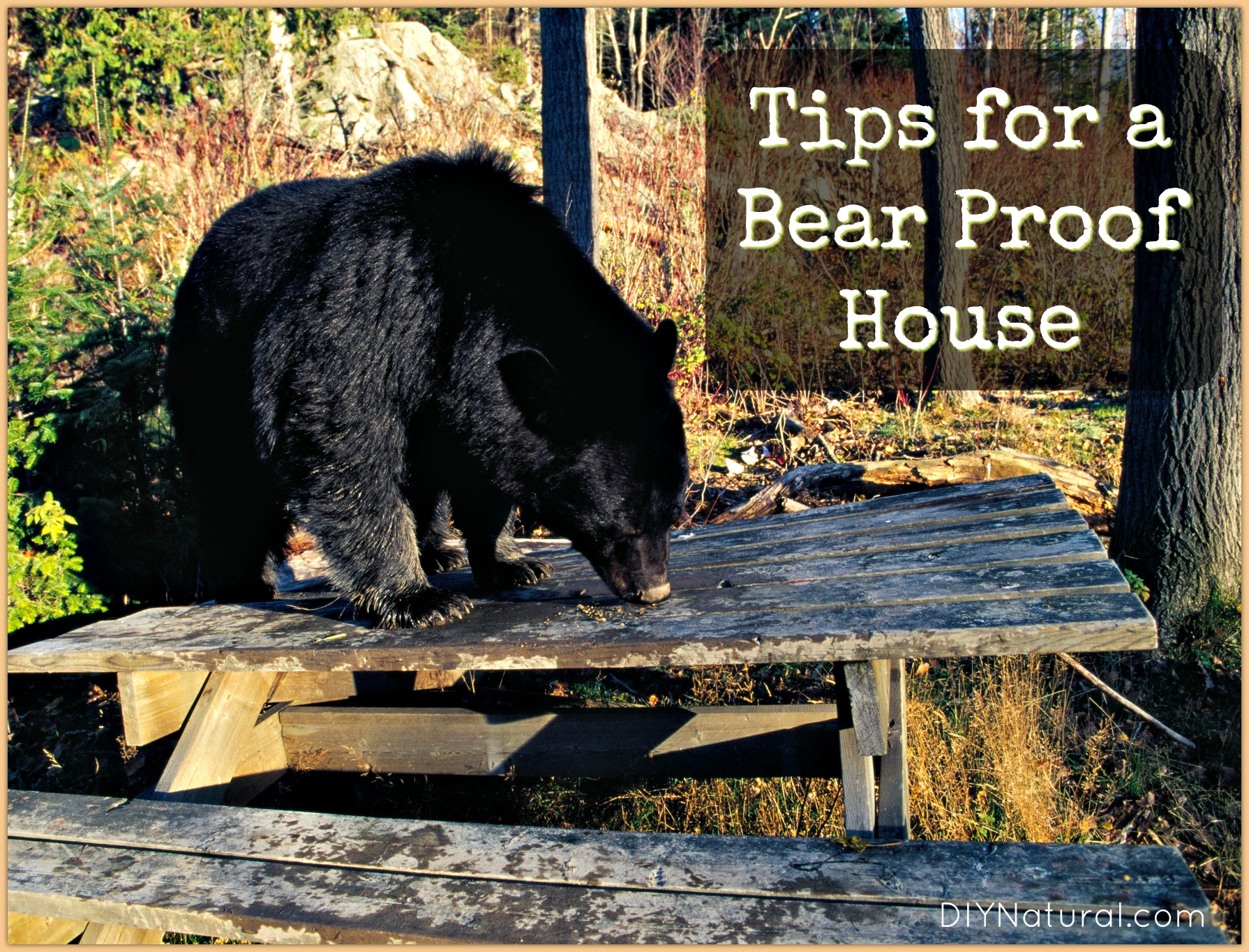 How to Ensure You Have a Bear Proof House Naturally