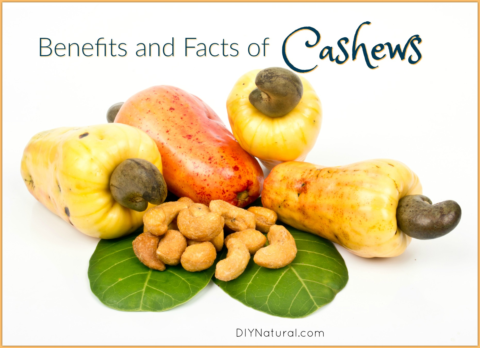 Benefits of Cashews  A Few Interesting Facts About Cashews