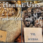 Frankincense And Myrrh 7 Uses Including A Recipe For Soap And Hydrosol