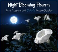 Night Blooming Flowers: A List of Flowers to Grow in Your ...