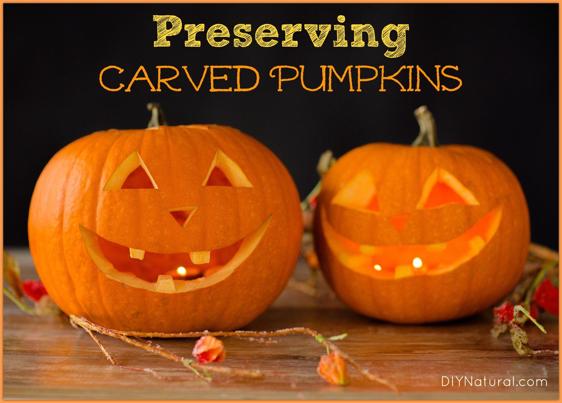 Fall Dog Wallpaper Preserving Carved Pumpkins